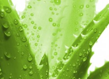 15 Beauty Uses For Aloe Vera