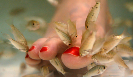 fish pedicures