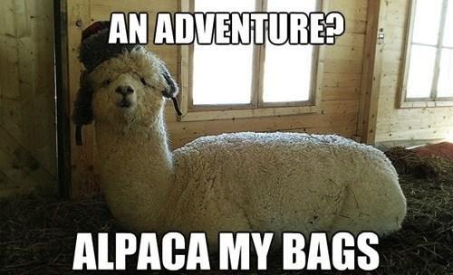 Alpaca-My-Bags-Funny-Meme