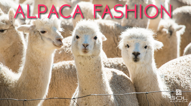 Why Alpaca Hair Will Be Your Fall/Winter 2015 Bestie.