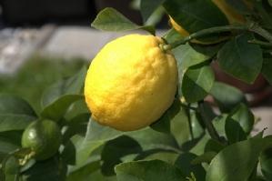 lemon juice and citrus