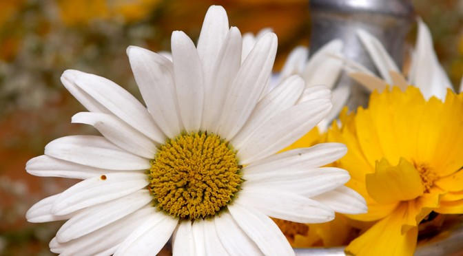 Advantages and Disadvantages of Homemade Cosmetics Flower