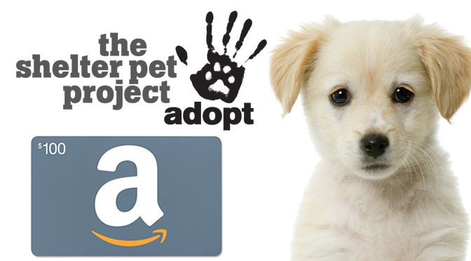 #GIVEAWAY: Help Shelter Pets & Win a $100 Amazon Gift Card!