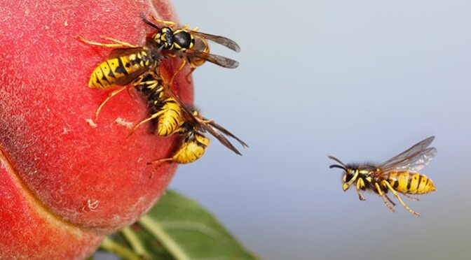 Most Common Signs That Your Home Has a Wasp Problem