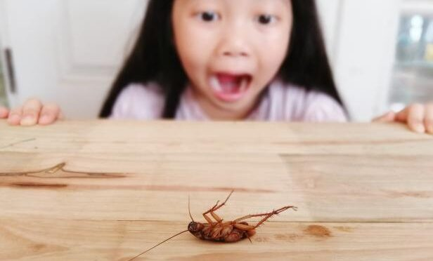 Reliable Methods To Get Rid Of Pests At Home